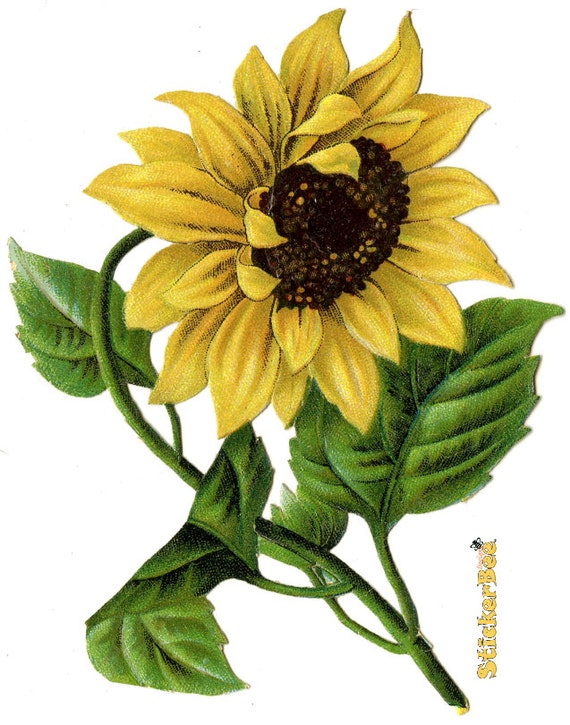 Vintage Sunflower Wall Decor : Vintage looking sunflower kitchen wall art by