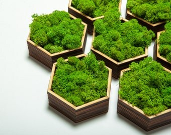 Honeycomb Live Moss, Laser Cut Wood Art, live plants, Christmas gift, wedding gift, nature art, Live Moss, wall art, office decor