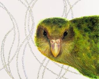 Kakapo Giclee Print