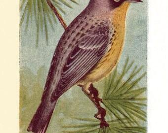 Vintage Style Robin Art Print - Bird Art - Wall Art - Home Decor - Altered Art - Mixed Media - Farmhouse - Scrapbooking - Assemblage