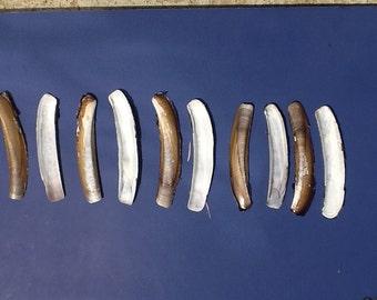 10 razor clam shells