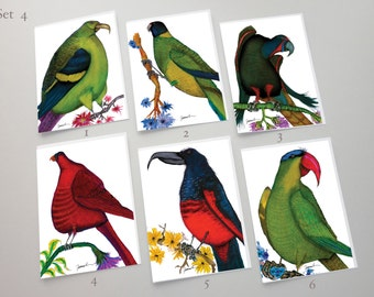4) Parrot Cards - a set of 6 fun greeting cards