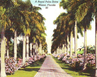 Vintage Miami, FL , Stamped Postcard, 195?