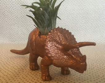 Dinosaur air plant holder plus air plant