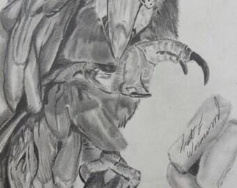 Custom pencil sketch of a Parrot
