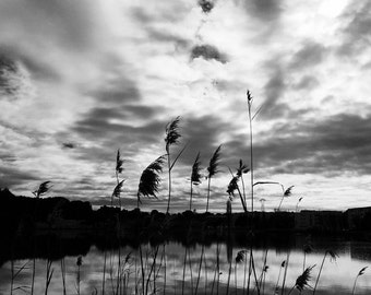 Istres... The reeds...