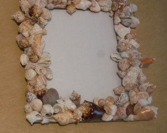 Seashell Picture Frame from the Gulf of Mexico