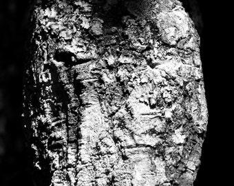 B&W Tree Bark and Lichen