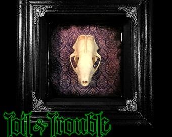 Skunk Skull Oddity Keepsake Shadow Box