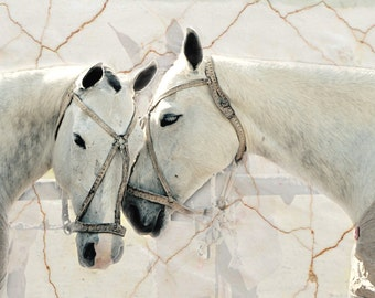 11 x 14 or 8 x 12 Print - White Mares, marble backdrop