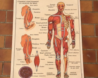 ROSSIGNOL MDI Vintage French School Poster anatomy Two Sides 1960s 25
