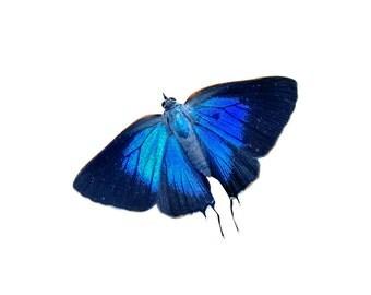 White M Hairstreak - Butterfly Vinyl Decal - Varying Sizes