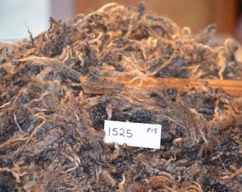 Border Leicester Cross Raw Wool Lamb's Fleece, 1 lbs 11 ozs