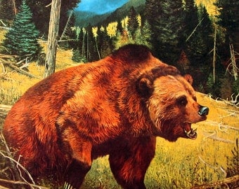 The Grizzly Bear - 1961 Animal Print - Vintage Book Page - Rustic, Nature, Wild Animal Print - For Framing - 12 x 9
