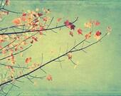 Nature Photography, Autumn Leaves, Woodland Wall Decor, Rustic Decor, Colorful Art, Red Aqua Wall Art, Landscape