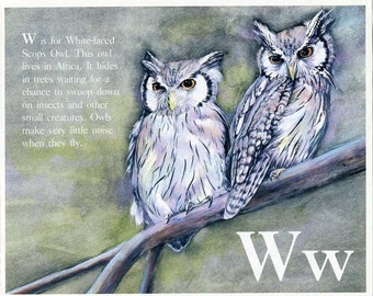 Vintage 1980's Bird Alphabet Book Child's Bookplate Illustration, Print for Framing, W for White Faced Scops Owl  Bird Print, Owls Print