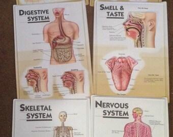 Set of 8 3D Human Body Charts Vintage Classroom Charts