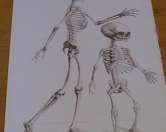 Antique Vintage Anatomy Book Page of the Skeleton Anatomical Diagram Human Skeletal System Human Bones
