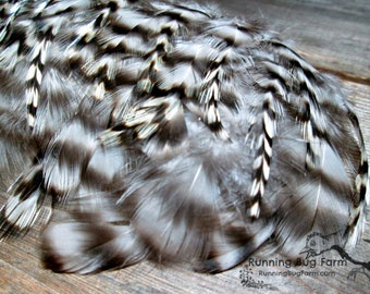 "Assorted Real Feathers Grizzly Feathers Barred Rock Rooster Black White Grey Real Bird Feather Loose Eco Friendly Plumes 25 @ 3 - 3.5"" / 29R"