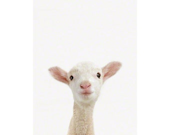 Lamb Little Darling. Animal Wall Art. Baby Animals Nursery Art Print. Animal Nursery Decor. Baby Animal Photos.