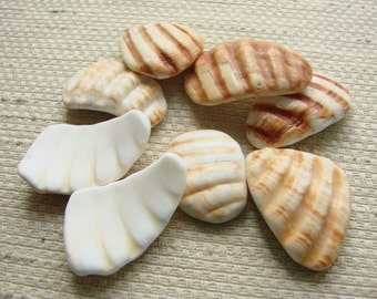 8 Scallop Shell Wing Fragments -- Very Large Pendant Sizes (SH104) Mediterranean sea shell shards, Ridged Seashells, Beach treasures
