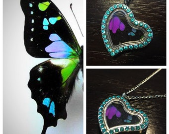 Real Butterfly Wing Jewelry Necklace Pendant Graphium Weiskei Heart Shape LRG