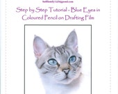 Step by Step Drawing Tutorial - Blue Eyes in Coloured Pencil on Drafting film
