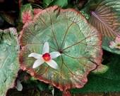 "Momma luvs Spring & 20%-- Indian Rhubarb Concrete Bird bath stands on pole - cement from a live Darmera leaf #6128, 8.5 x 8.5"" - Oregon Art"