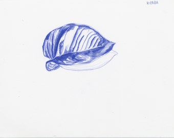 Blue Pothos Drawing 4