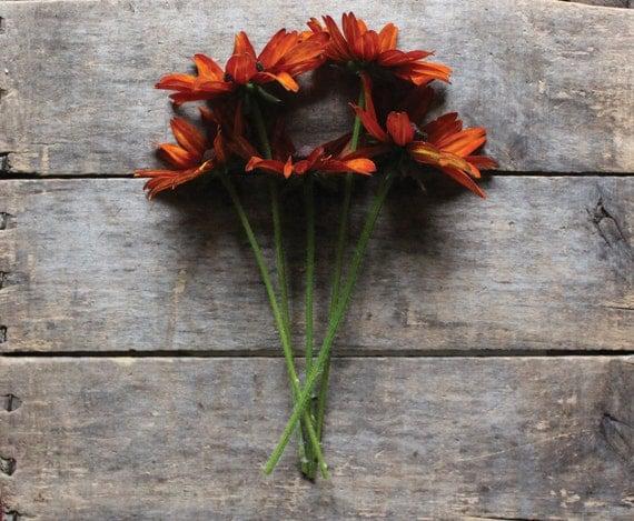Gloriosa Daisy // organic heirloom flower seeds // from our farm // biennial // flower garden // organic garden // seed packet