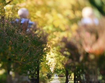 "Garden Park Photograph - ""Fall in the Park"" fine art fall autumn photograph affordable wall art home decor wall art trees 8x10, 11x14, 16x20"