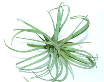 Light Green Air Plant - Faux Succulent - Artificial Succulents