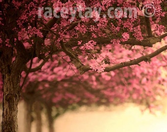 Cherry Tree Print, Pink, Brown, Cherry Blossom, Girl Nursery Decor, Nature Photography Large Wall Art