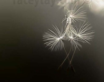 Dandelion Print, Flower Photography, Black, Beige, Girl Nursery Decor, Dreamy, Dandelion Wall Art, Faith Manages