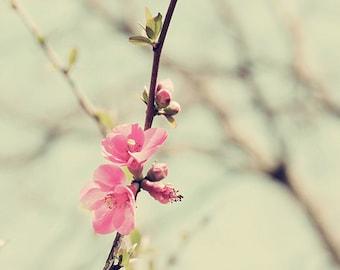 Pink flower photography, pink floral art, floral bedroom art, floral nursery art, floral wall art, pink flower photos, pink and green art