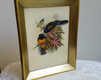 "Antique Birds Botanicals Wall Art Litho Print ""Trogon Ramonia, Castlenau"" by J. Gould & H.C. Richter, Gold Wood Frame, Vintage Ornithology"