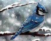 Blue Jay Abstract Animal Giclee Archival Art Print