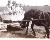 Vintage Photograph - Kids in Horse-Drawn Cart - VernacularPhotograph, Ephemera (A)