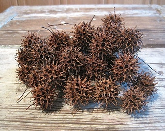 40 Natural Sweet Gum Balls
