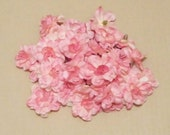 SALE - Lot of 30  Blossom -Peach - less than half price