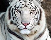 Custom Made Siberian Tiger suit / Pyjamas