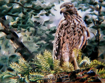 Red Shouldered Hawk 11 x 17 print (image 8.25 x 16.5) personally signed by artist RUSTY RUST / H-38-P