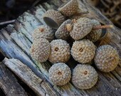 Set of 100 Acorn Caps Great For DIY Crafts | Found At The Base of the Wasatch Mountains | Fall Decorations | Great for Wreath Making