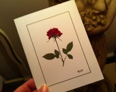 Plum pink rose note card