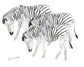 2 Zebras