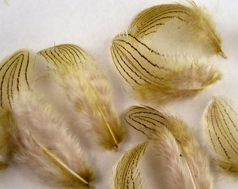 silver pheasant feathers 12 assorted olive K18