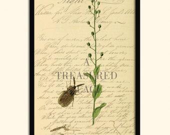 Insect prints, Fine art prints, Wall art prints, Prints, Illustrations, Wall art, Posters, Botanical prints, Print sets, Giclee print
