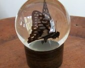 Antique Victorian Glass Globe Cloche Taxidermy Butterfly Woodland Decor