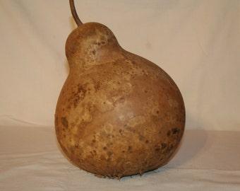 Wine Kettle Gourd uncleaned