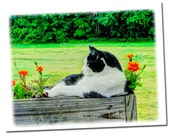 Cat Card, note size all occasion blank greeting card
